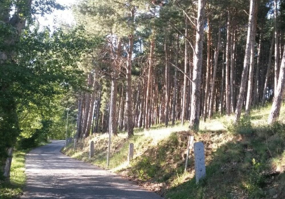 Bosquet municipal Puigcerdà